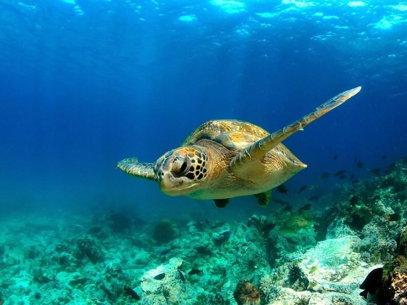 SwimTrek - Turtles