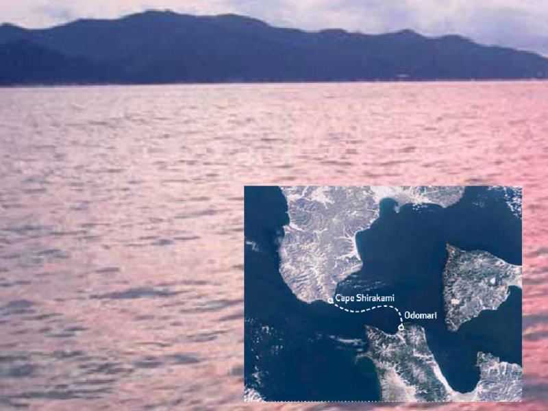 Tsugaru strait swim crossing small