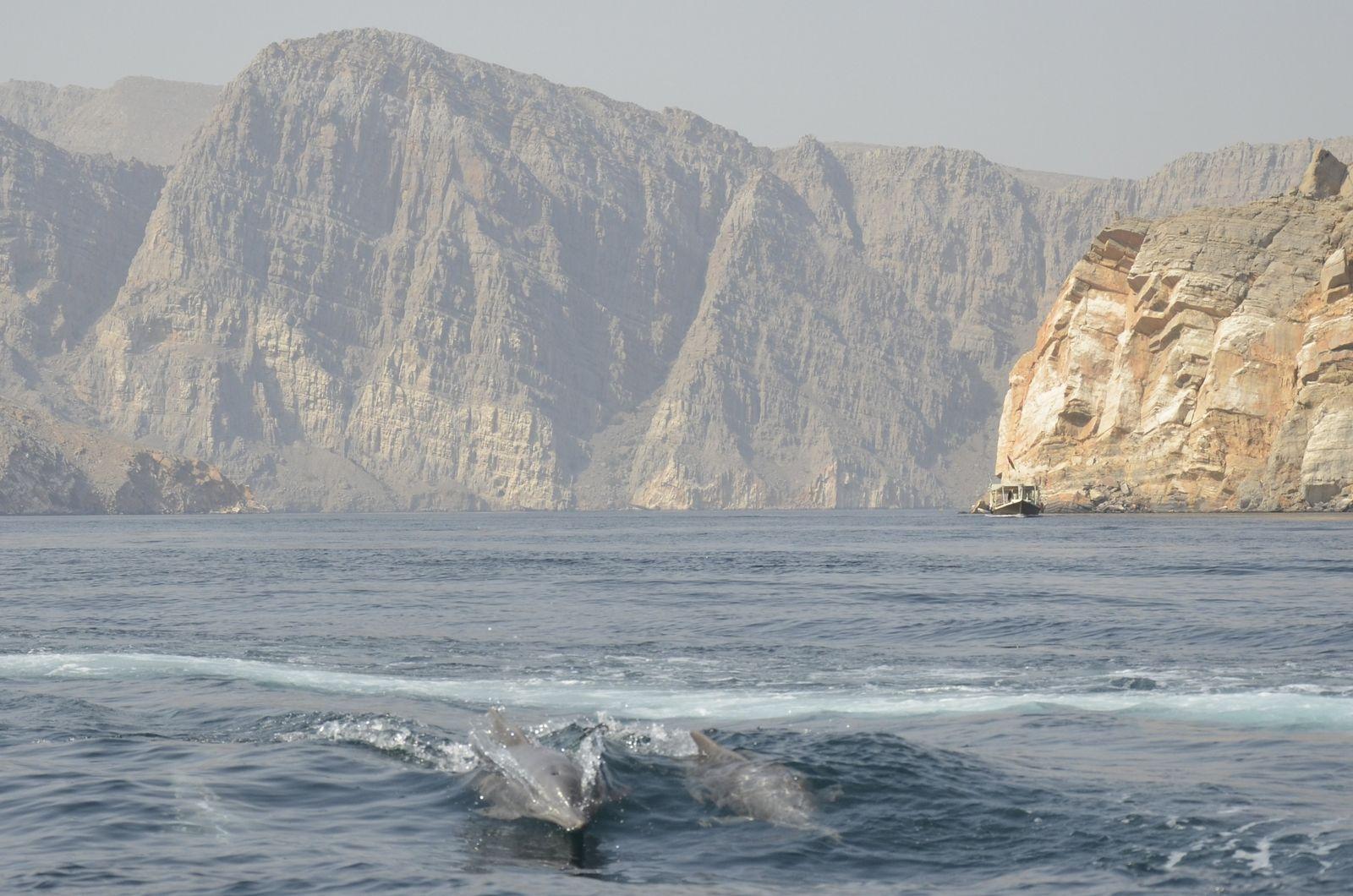SwimTrek - Dolphins