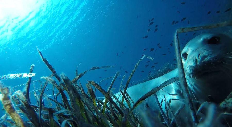 SwimTrek - Marlys penguin