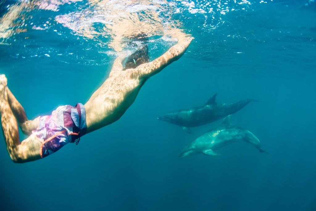 SwimTrek - Marlys iguana