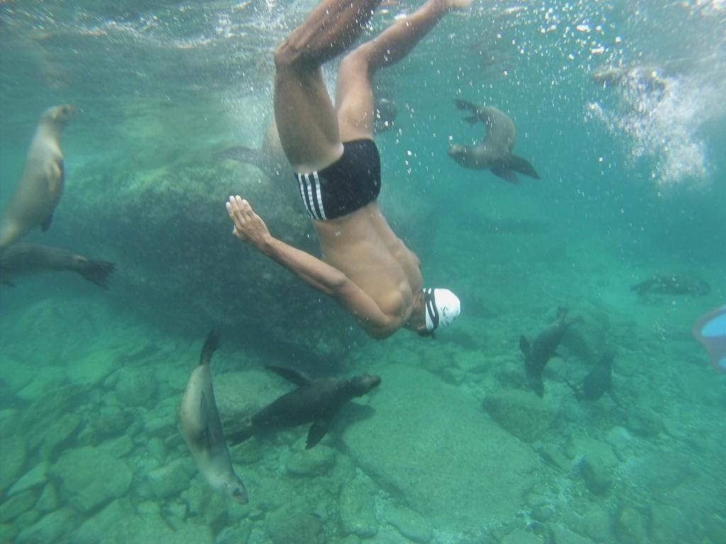 SwimTrek - Marlys fish